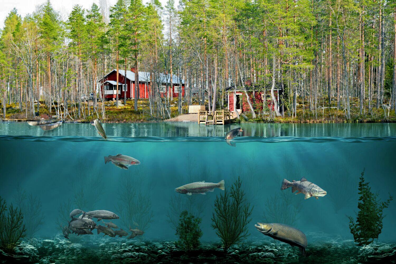 Kuvassa Fishing Leader Sammakkolammen kämppäkartano.